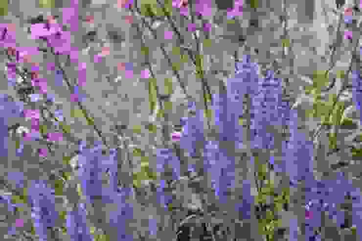 Voortuin 'anders dan anders' van Dutch Quality Gardens, Mocking Hoveniers