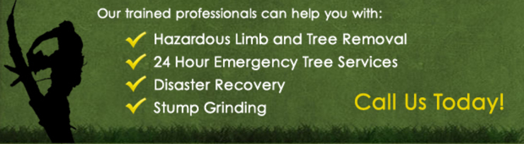 by Tree Felling Johannesburg