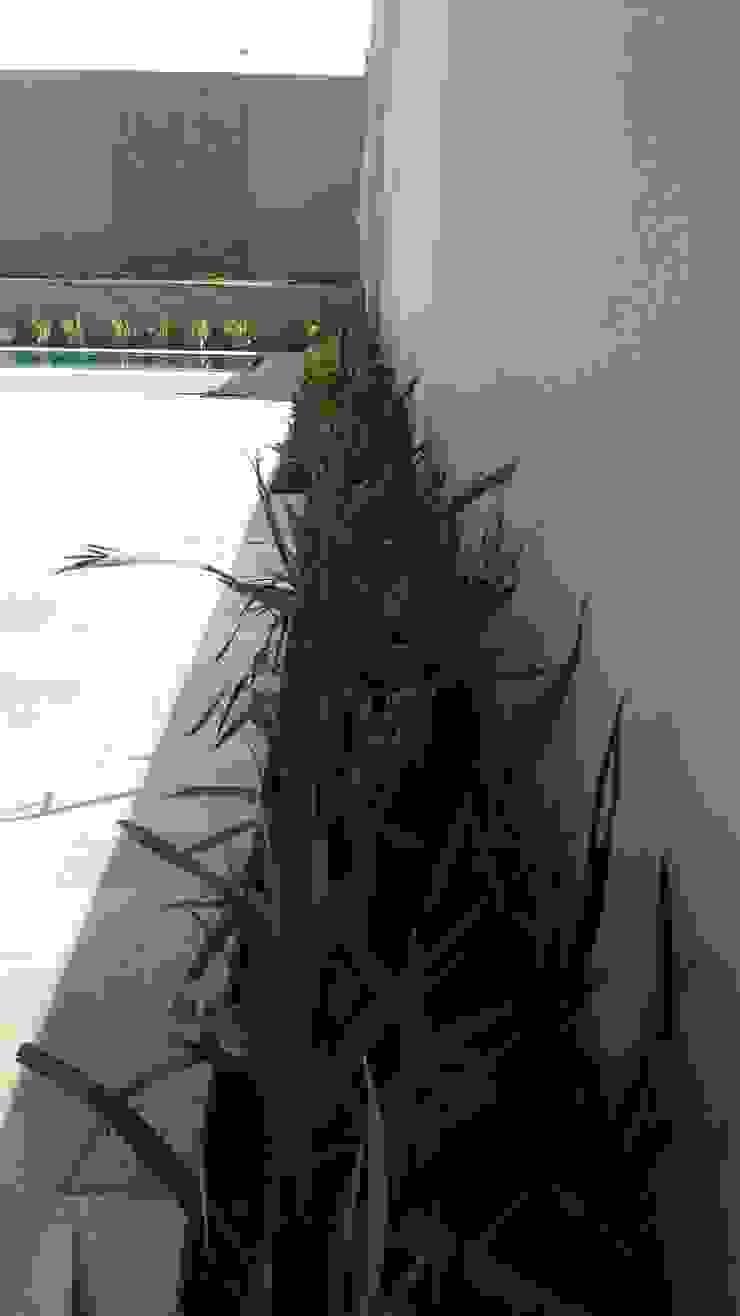 Jardin tropical par Carla Monteiro Arquitetura e Interiores Tropical