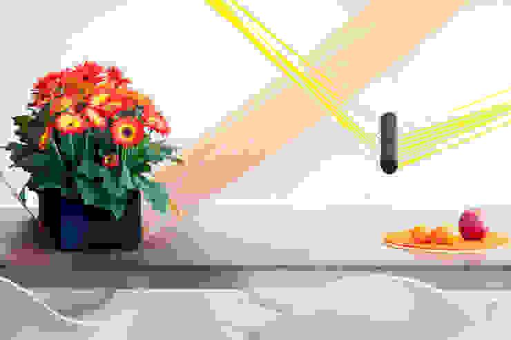 Pflanzenfreude.de İç Dekorasyon Rengarenk