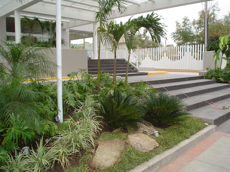 Tropical style garden by BARRAGAN ARQUITECTOS Tropical