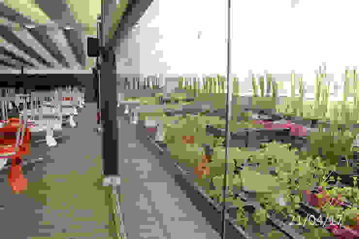 TP618 Balcones y terrazas de estilo moderno Derivados de madera Verde
