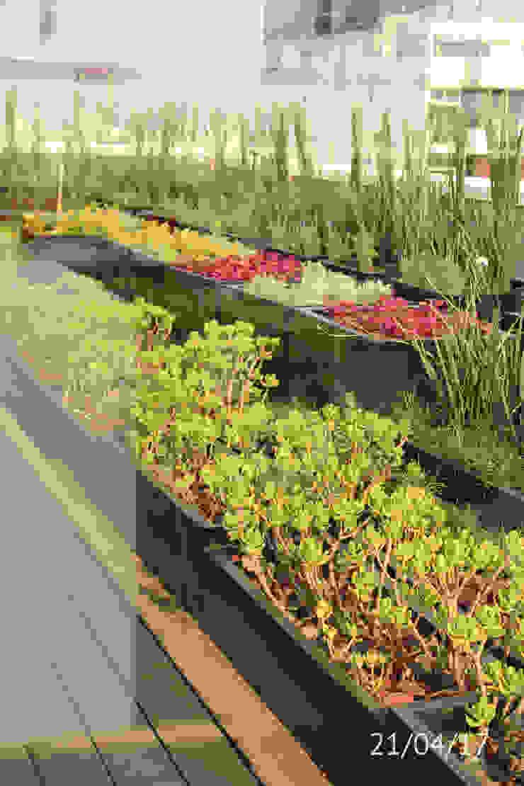 TP618 Balcones y terrazas de estilo moderno Compuestos de madera y plástico Verde