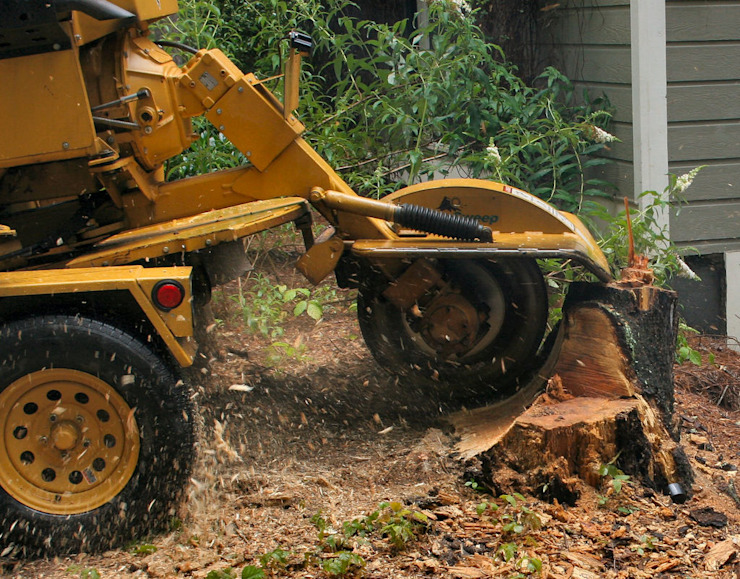 Stump Removal Services by Cape Town Tree Felling