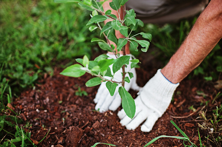 Tree Planting and Replacement Cape Town Tree Felling