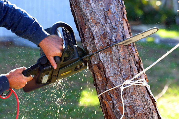 Professional Tree Cutting by Cape Town Tree Felling