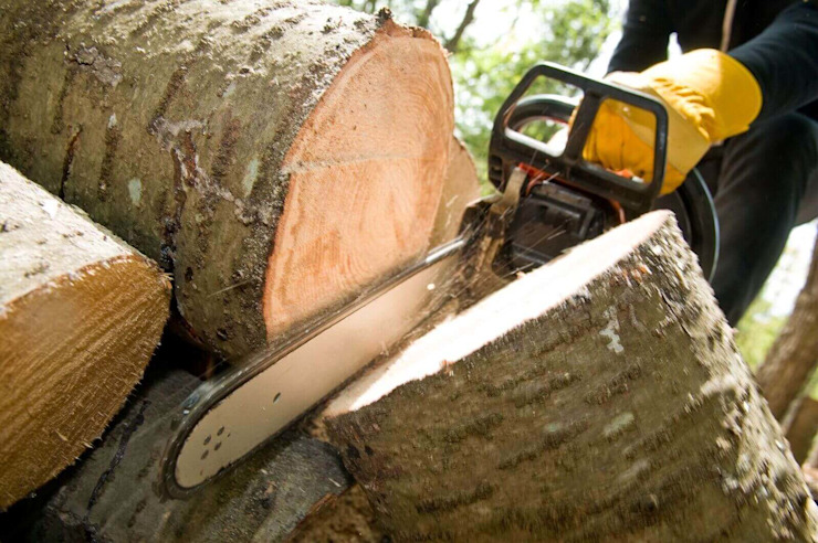 Residential Tree Cutting by Tree Felling Johannesburg
