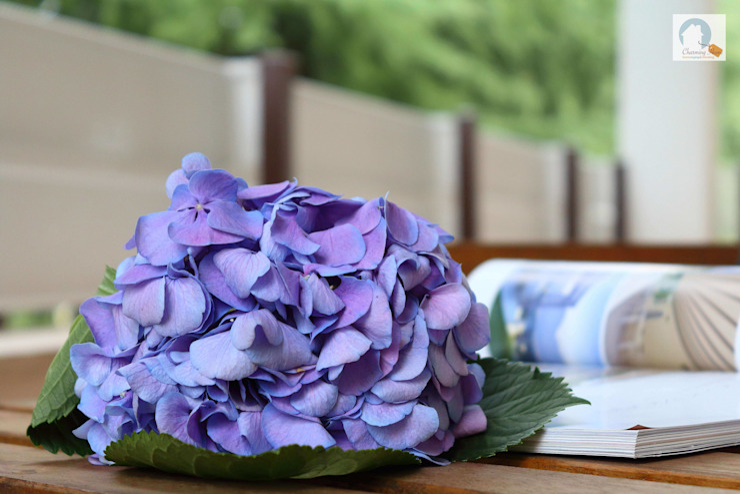 Charming Home Balcon, Veranda & TerrassePlantes et fleurs