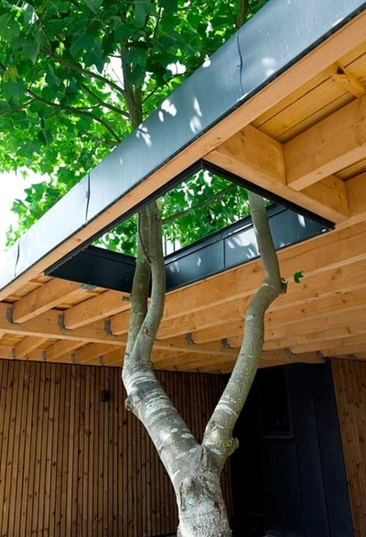 by EC-BOIS Modern Engineered Wood Transparent