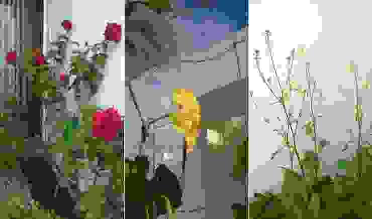 Thiết kế mảng xanh từ sân vườn bởi Công ty TNHH Xây Dựng TM – DV Song Phát Hiện đại