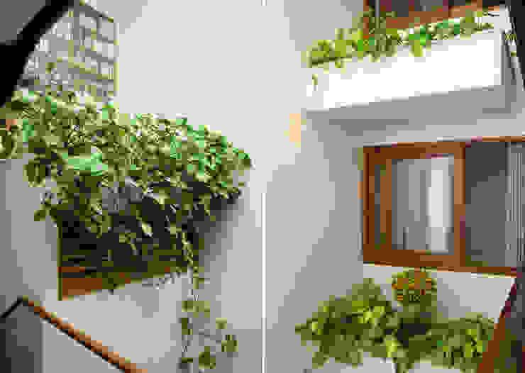 Bồn cây trước cửa sổ, khu giếng trời cũng trồng nhiều cây phù hợp với điều kiện ánh sáng. bởi Công ty TNHH TK XD Song Phát Châu Á Đồng / Đồng / Đồng thau