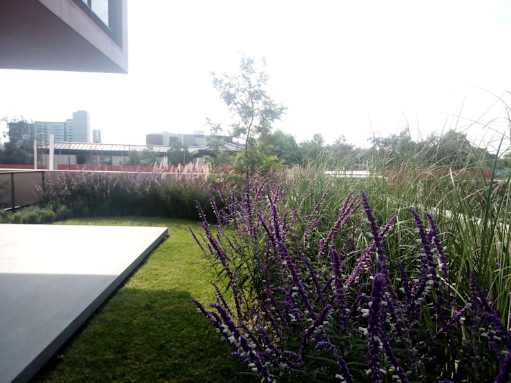 Jardín posterior de Verde Lavanda Mediterráneo