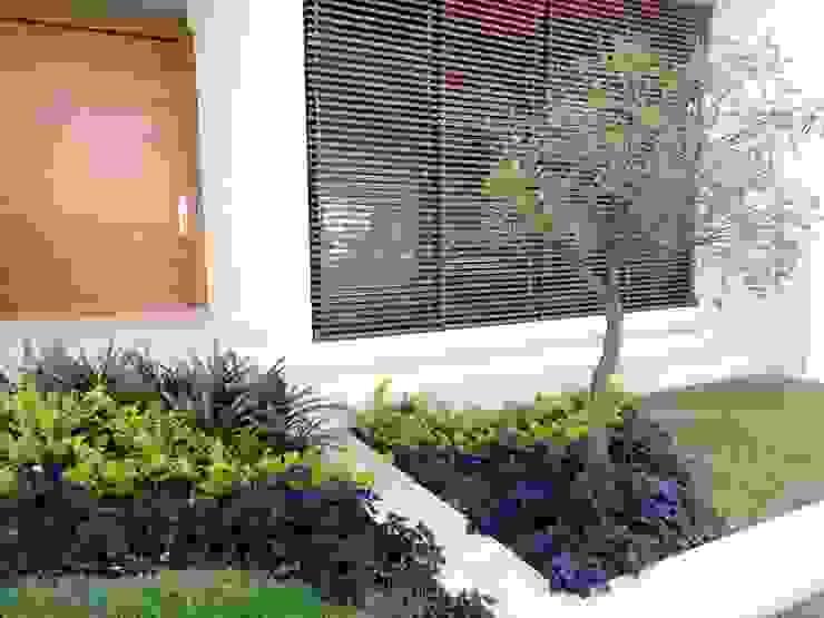 Verde Lavanda Палісадник Різнокольорові