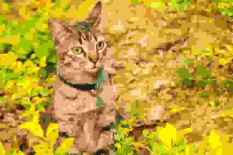 De la Serie Rostros Felinos. de Proyectos Kukenán SAS