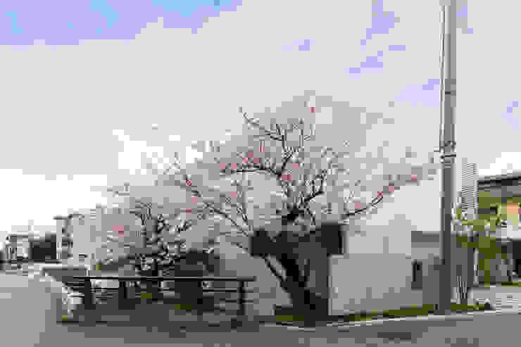 桜と暮らす家 Kenji Yanagawa Architect and Associates モダンな 家 コンクリート 白色