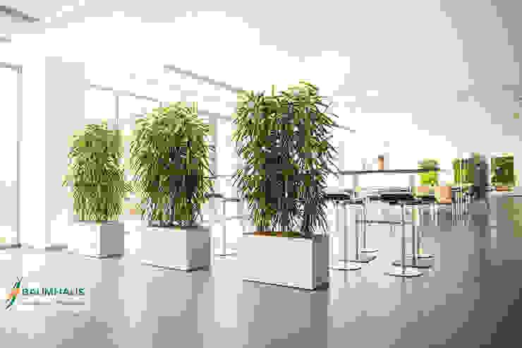 Ospedali in stile  di BAUMHAUS GmbH   Raumbegrünung Pflanzenpflege