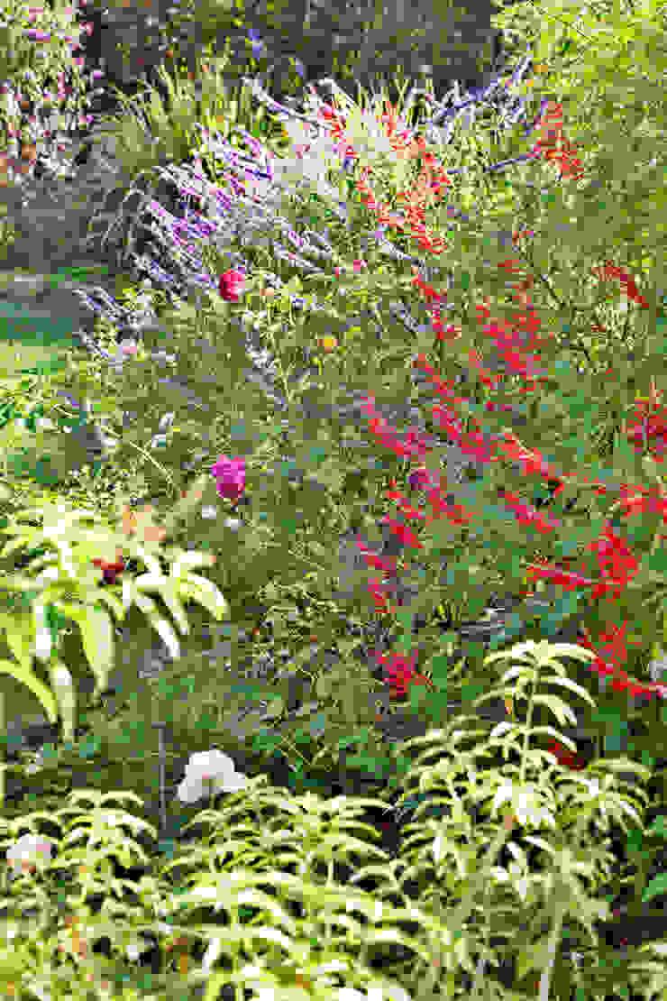 Arbustos e flores por Maria Mayer | Interior & Landscape Design Campestre