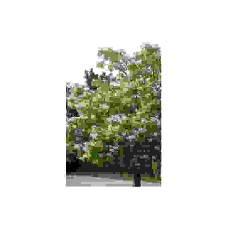 Het planten van Trompetboom Landelijke tuinen van onlinegroen Landelijk