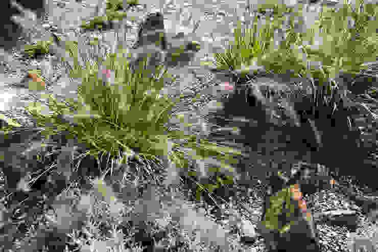 Modern Garden with a rustic twist, Pennisetums Сад в стиле модерн от Yorkshire Gardens Модерн