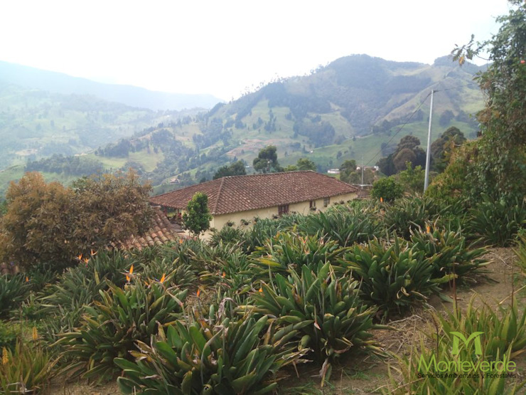 Siembra de Aves de Paraiso de Monteverde Ltda