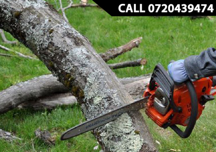 by Tree Felling Pretoria