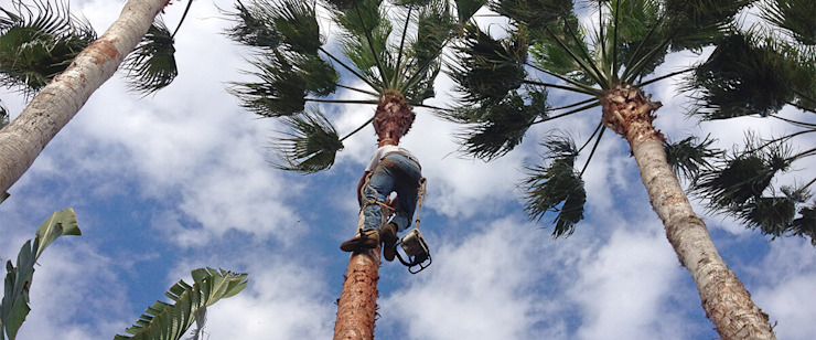 Palm Tree Trimming Services Pretoria by Tree Fellers Pretoria