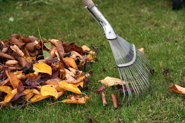 Reliable Gardening Cleaning by Tree Fellers Pretoria