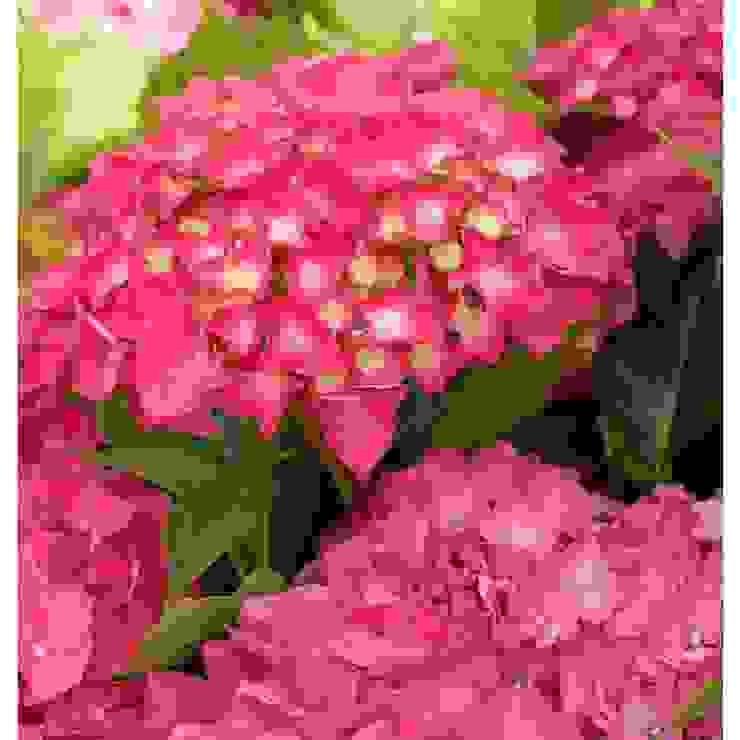 Mooi kleuren in de tuin. van onlinegroen