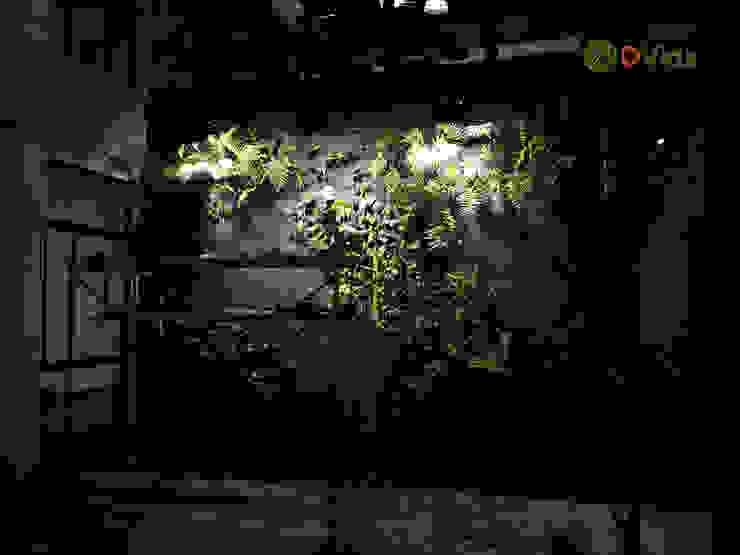 Plantación de muros verdes Oficinas y bibliotecas de estilo rural de DVida Jardines verticales Rural