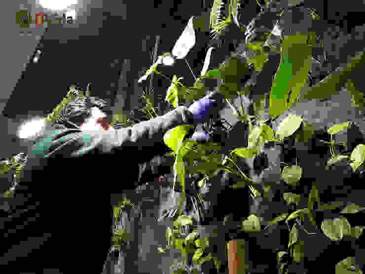 Plantación de jardines verticales Oficinas y bibliotecas de estilo rural de DVida Jardines verticales Rural