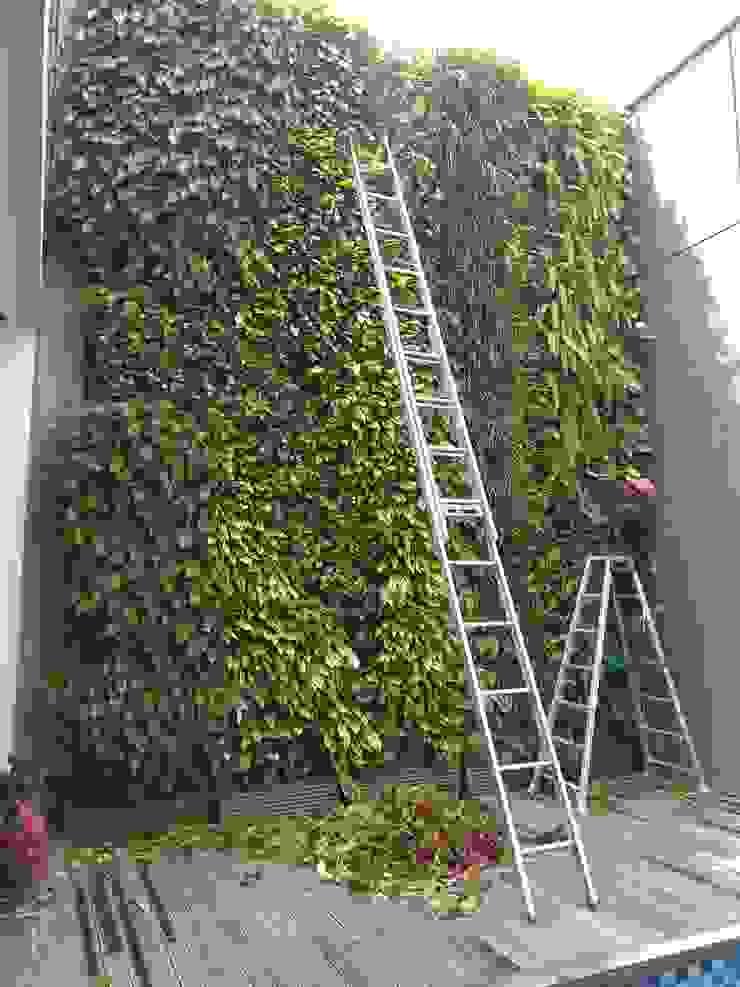 Perawat taman vertikal Oleh Tukang Taman Surabaya - Tianggadha-art Modern Aluminium/Seng