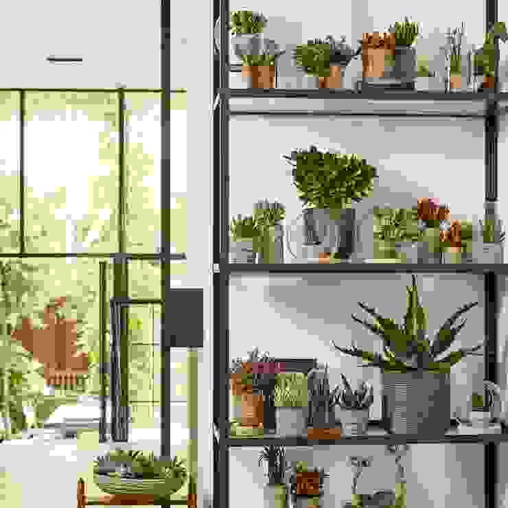 Zimmerpflanze des Monats von Pflanzenfreude.de Ausgefallen