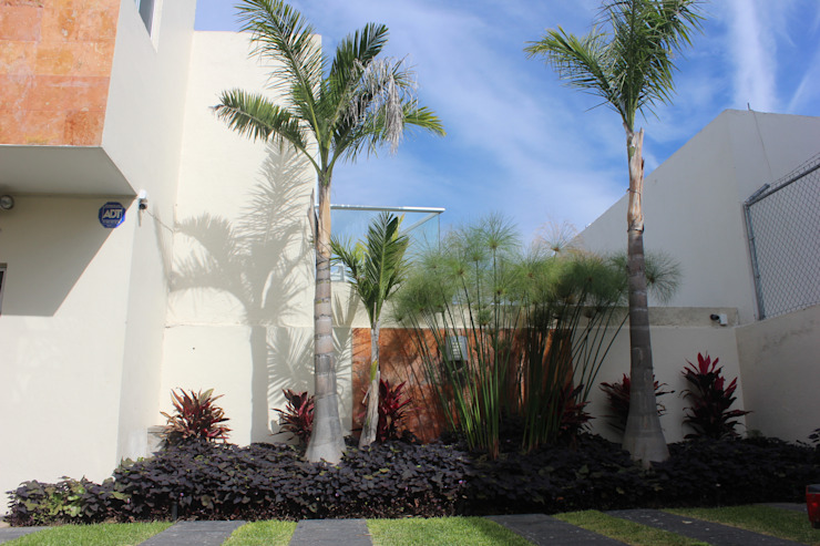 Tropical style garden by Ambient Natura Tropical