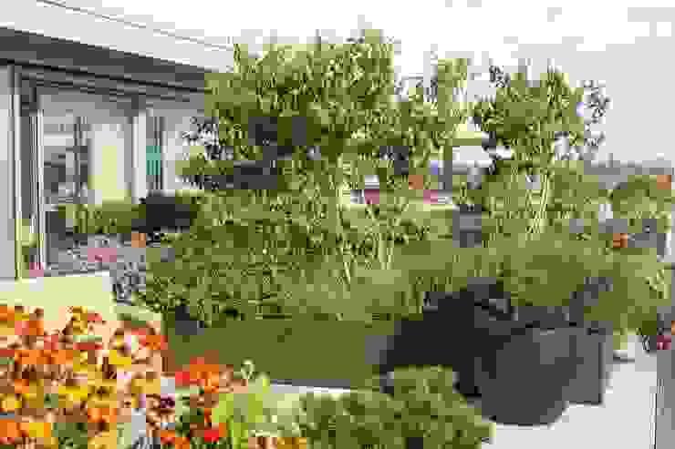 Fulham Reach, London Aralia Roof terrace Wood Orange