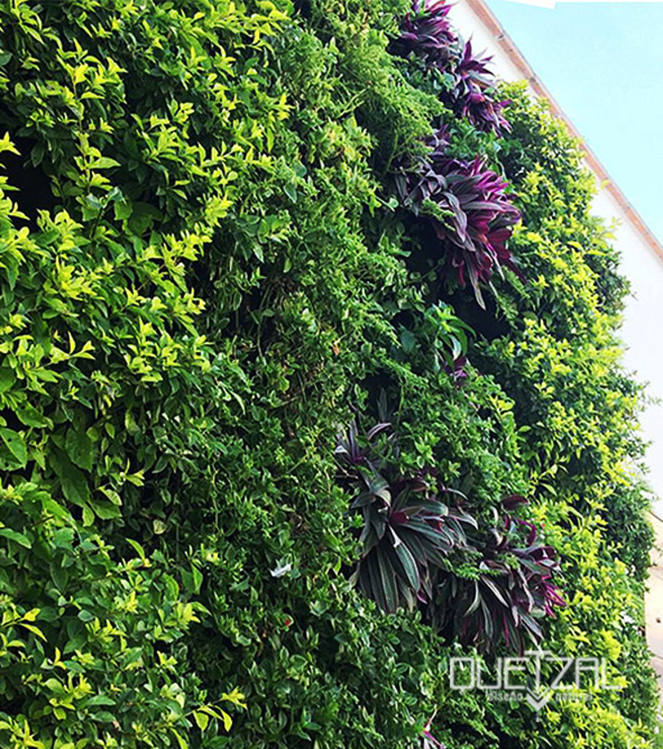 Jardín vertical residencial Jardines de estilo minimalista de Quetzal Jardines Minimalista