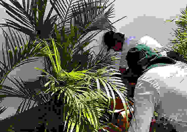 Mantenimiento e instalación de áreas verdes Jardines de estilo tropical de Quetzal Jardines Tropical