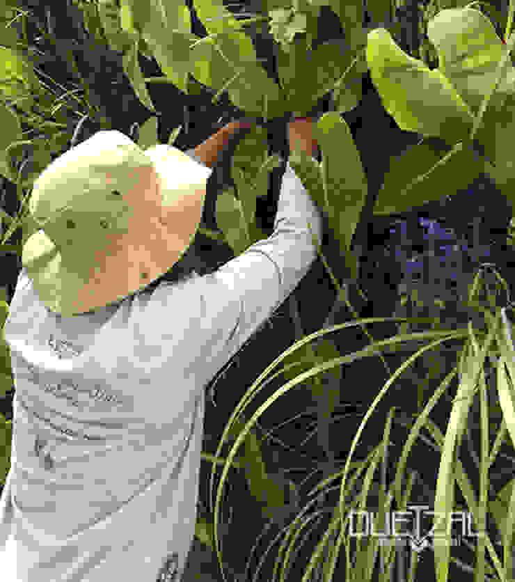 Mantenimiento e instalación de áreas verdes de Quetzal Jardines Tropical