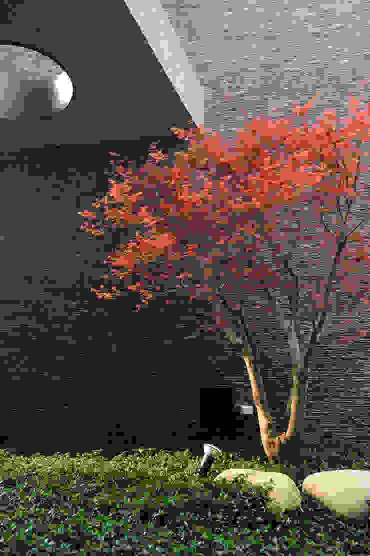 石與樹 Minimalist style garden by 黃耀德建築師事務所 Adermark Design Studio Minimalist