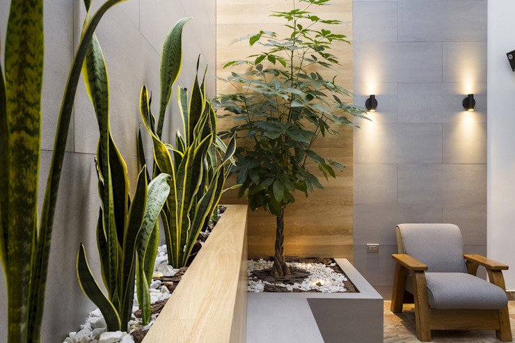 diseño interior jardín adentro: Jardines de estilo  por Adrede Diseño, Clásico