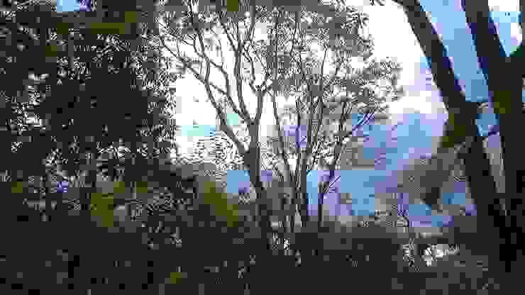 アカシデ 剪定後 の 庭や煌久