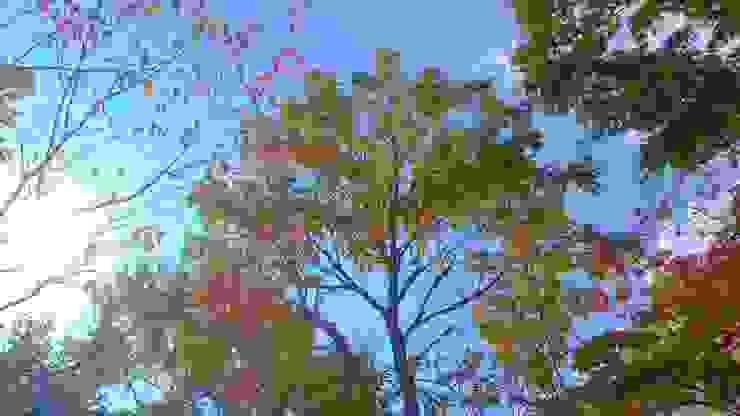 コナラ 剪定後 の 庭や煌久