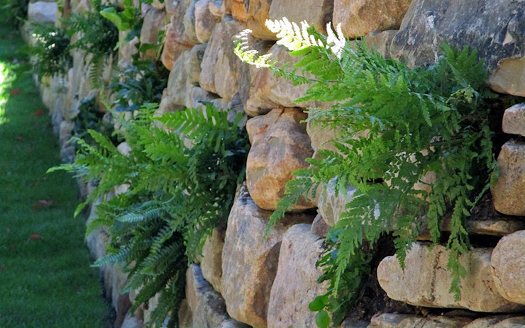 Native ferns by MyLandscapes Garden Design Кантрi