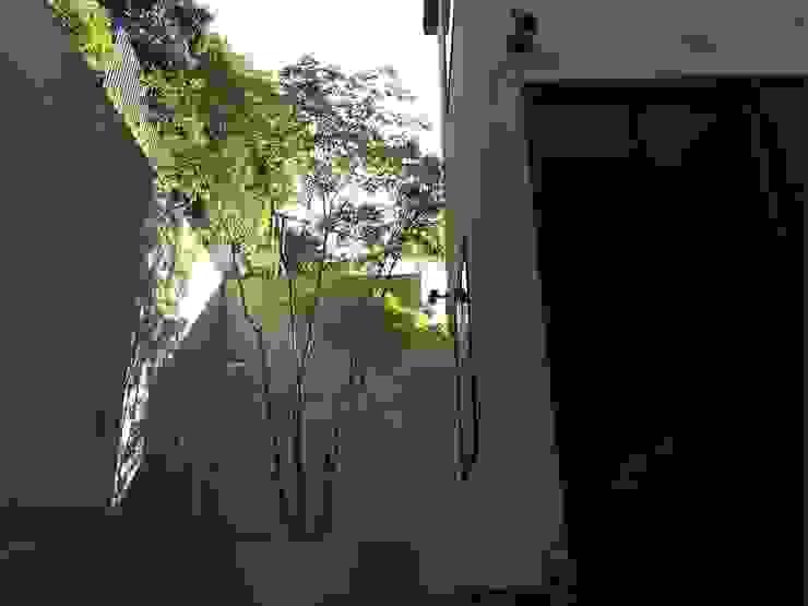 アオダモ 剪定前 の 庭や煌久