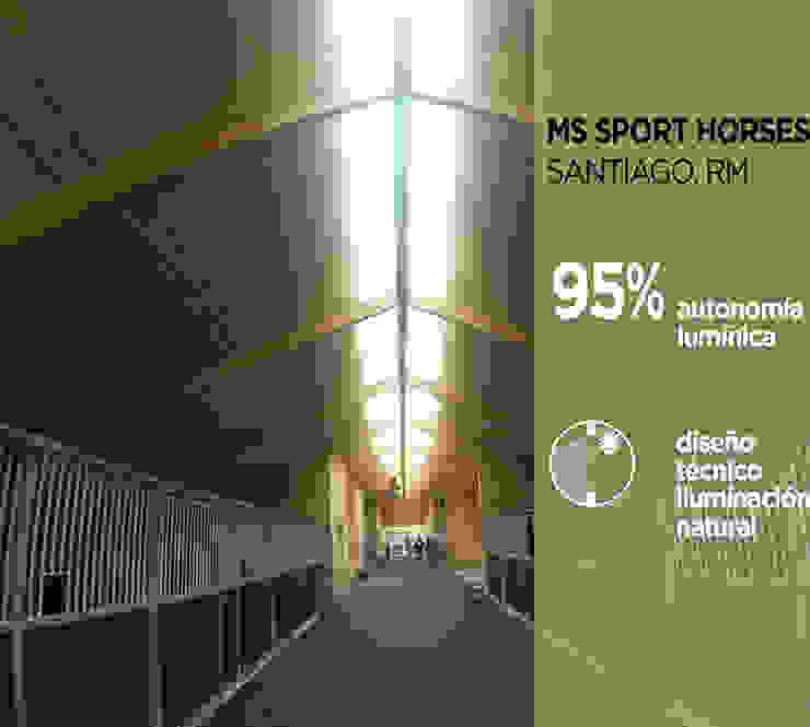 MS Sport Horses de Pasiva Moderno