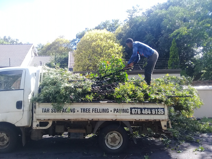 tree felling by FEM TREE FELLING AND RUBBLE REMOVALS