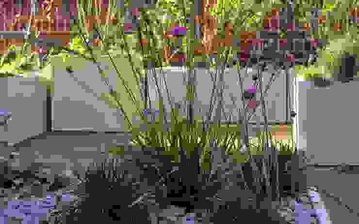 Native planting MyLandscapes Garden Design Atap
