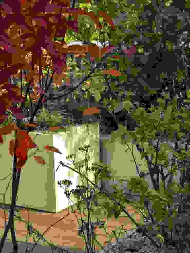 Vivid autumn colours rooftop MyLandscapes Garden Design Atap