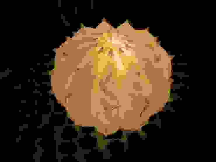 Desert Light modello Echinocactus Lui&Lei di SeFa Design by nature Eclettico Fibre naturali Beige