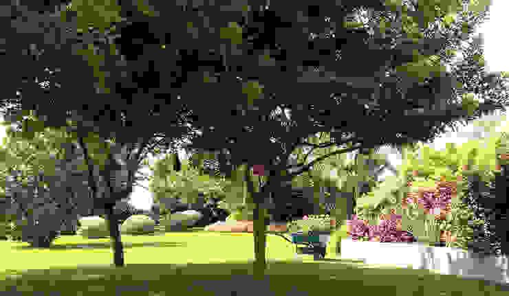 Tropical style garden by DECOGARDEN: PAISAJISMO Y JARDINERÍA Tropical