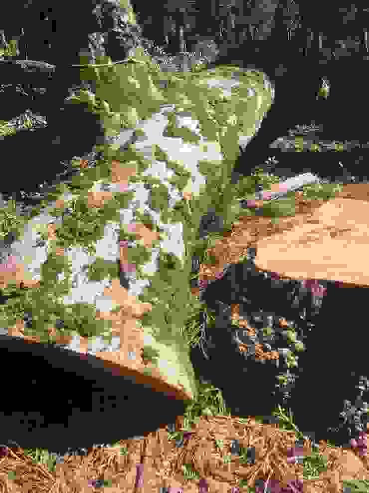 日本原生櫸木 根據 製材所 Woodfactorytc
